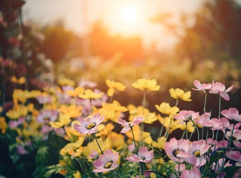 Die besten Garten Gadgets