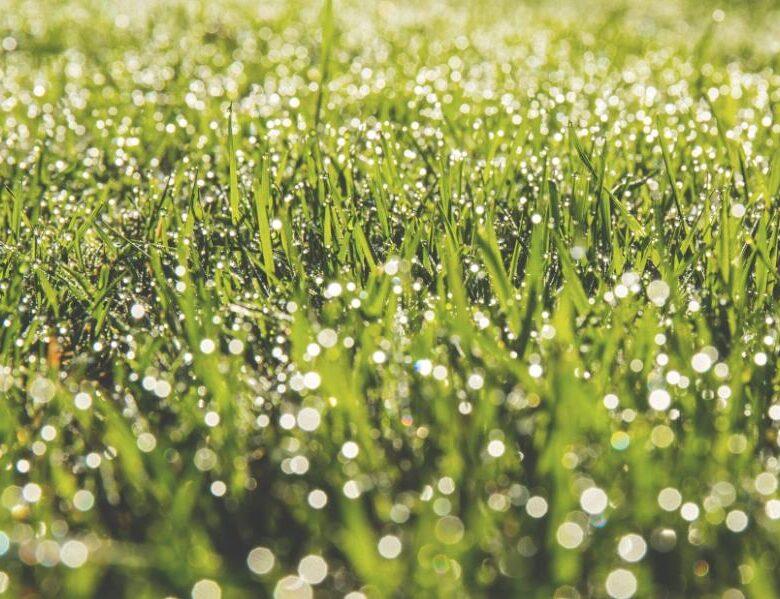 Die Bedienungsanleitung für grünen und vollen Rasen